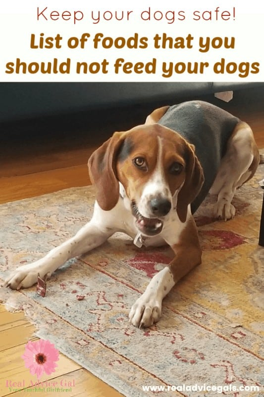 Keep your dogs safe. Check out this list of foods that you should not feed your dogs.