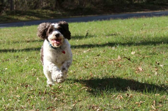 It is so important to keep your dog healthy check out our tips for how to exercise your dog
