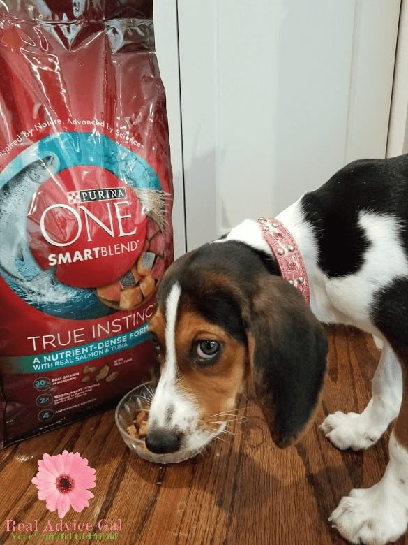Get a great dog food that will make sure your fur baby will love to eat, make it healthy, have energy and grow stronger. Check out Purina One SmartBlend.