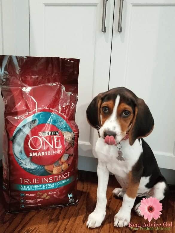 Have a happy puppy by giving them food they will love. Plus, read my tips on how to effectively train your dog to potty outside.