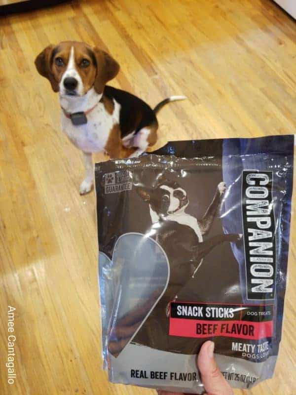 Tips on how to take care of a beagle puppy and how to choose the best dog food.